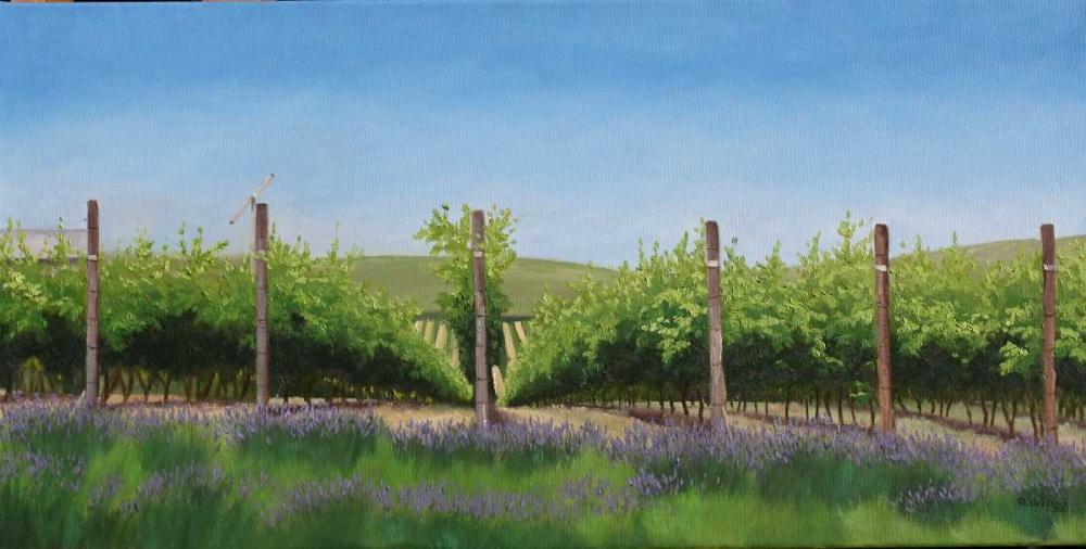 Lavender in the Vineyard