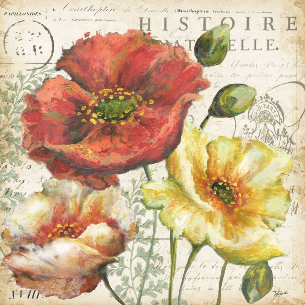 Spice Poppies Histoire Naturelle I