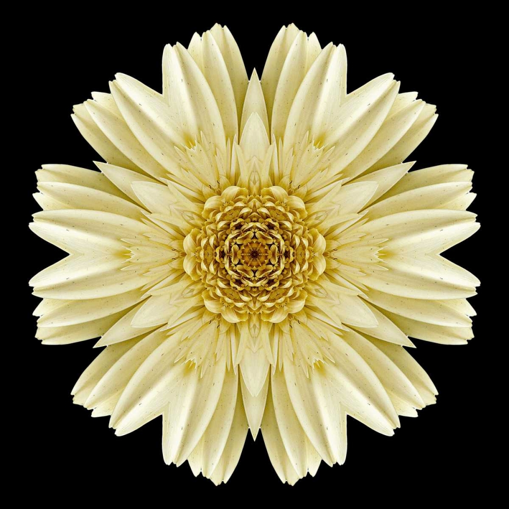 Kaleidoscope Daisy Black