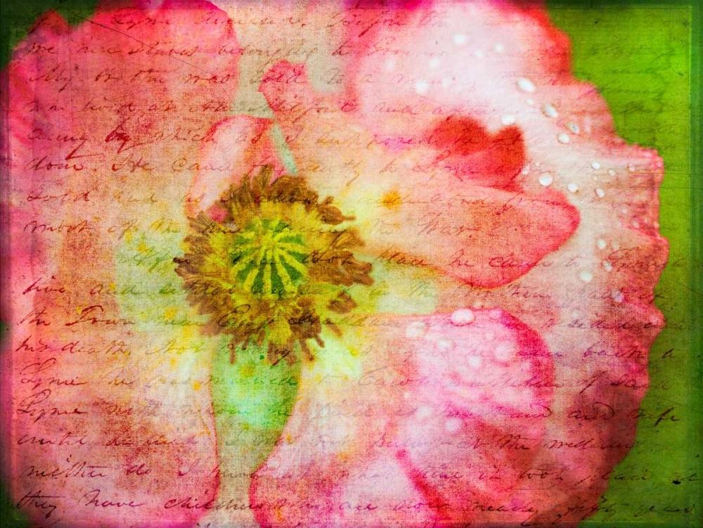 Colorful Wisteria in spring