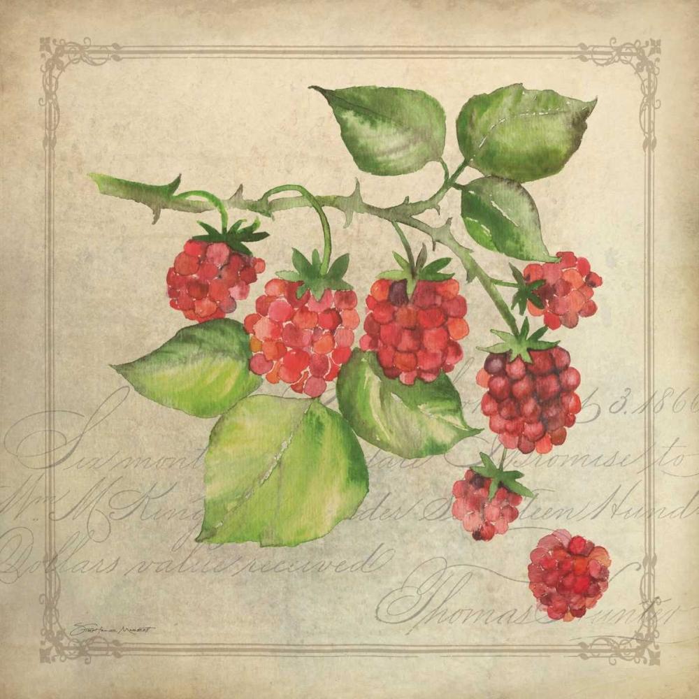 Rasberry Collage