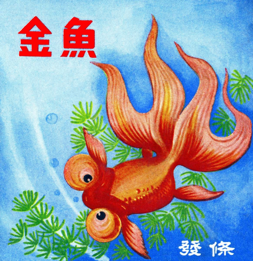 Fancy Bubble Eye Goldfish