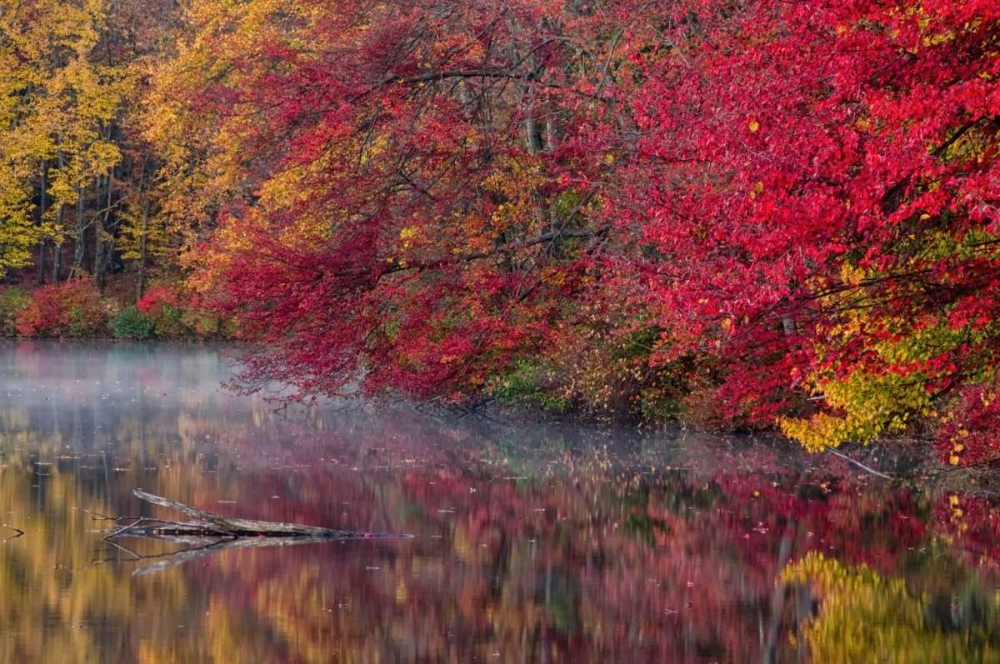 PA, Hidden Lake Trees in autumn reflect in lake