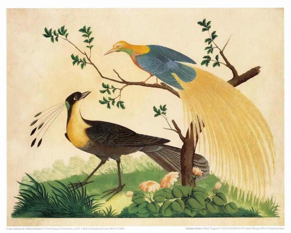 Bird of Paradise and Exotic Bird
