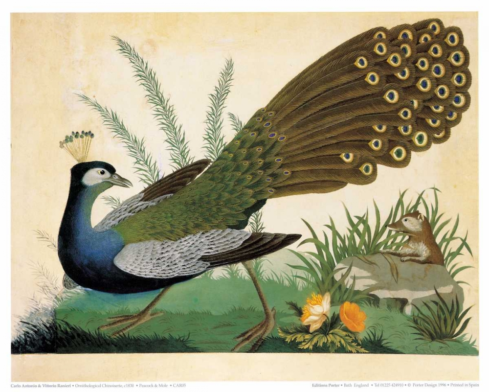 Peacock and Mole
