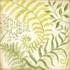 Fern Botanical I