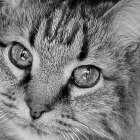 Cat Eyes BandW I