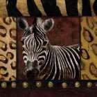 Zebra bordered