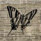 Butterfly On Print 2