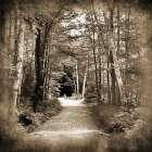 Vermont Mountain Trail 3