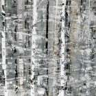 Birch Perspective Grey I