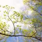 Spring Sky I