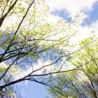 Spring Sky II