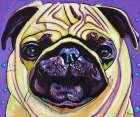Purple Pug