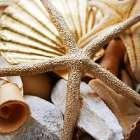 Gold Starfish II