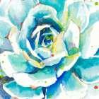 Turquoise Succulent Close Up