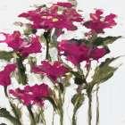 Plum Wild Flowers