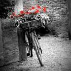 Flower Bike Square