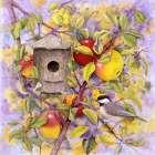 Chickadee and Apples