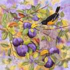 Oriole and Plums