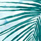 Palm Wonderful III