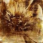 Poppy Gold IV