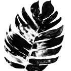 Monochrome Tropic VII