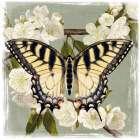 Butterfly Branch II