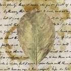 Earth Leaf II