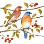 Birds and Berries IV