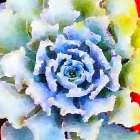 Succulente VII