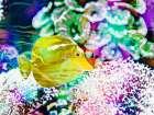 Vibrant Reef II