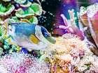 Vibrant Reef III