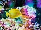 Vibrant Reef IV