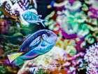 Vibrant Reef V