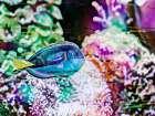 Vibrant Reef VI
