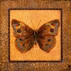 Crackled Butterfly - Buckeye