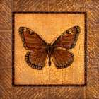 Crackled Butterfly - Monarch