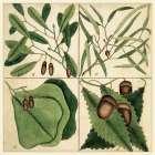 Catesby Leaf Quadrant II