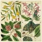 Catesby Botanical Quadrant I