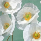 Poppies on Mint I