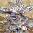 Succulent IV
