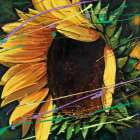 Sunflower in Motion