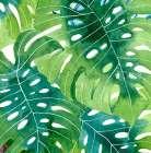 Tropical Botanica 2