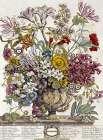 October - Twelve Months of Flowers